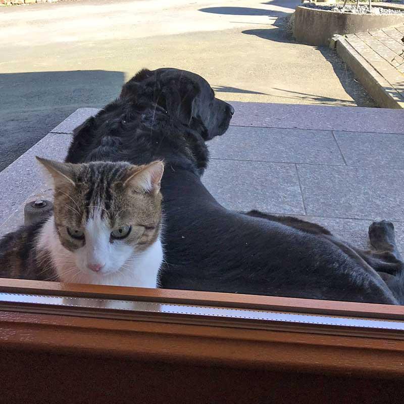 Mit Haustieren auf Reisen.